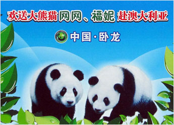 giant pandas Wang Wang and Funi
